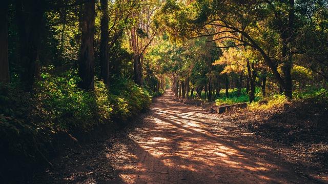 トトロの森イメージ